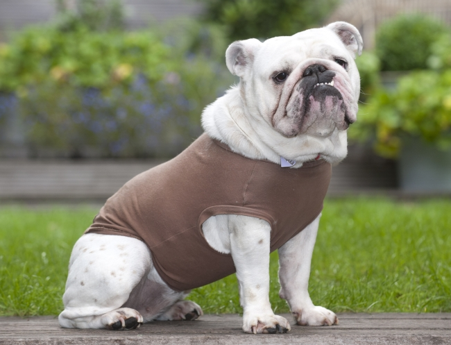 Buy your dog a wet Equafleece T-shirt to give some comfort and relief in the heat